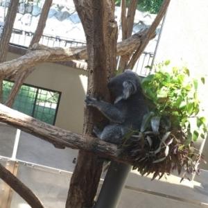 京都のサプライズ神戸市立王子動物園