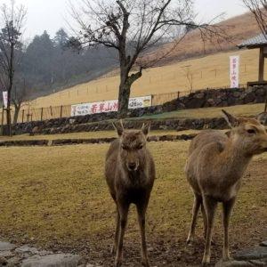 京都のサプライズ奈良公園