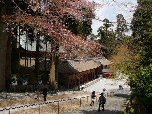 京都のサプライズ比叡山・ガーデンミュージアム比叡