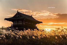 京都のサプライズ雄大な歴史の中で愛を告げる…  奈良 朱雀門