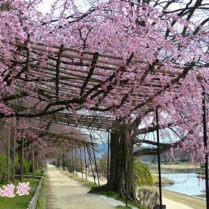 京都のサプライズなからぎの道
